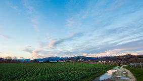 Evening in the fields of Friuli Stock Photography