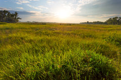 Evening fields scene Royalty Free Stock Photos