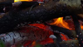 Evening fire in the forest from a birch tree crust. Valezhnik a little wet after the rain so the fire burns poorly. Summer evening. In the forest. Close-up stock video