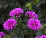 Evening flowers royalty free stock photo