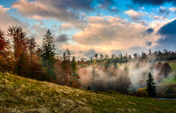 Evening fog in forest on the hill Royalty Free Stock Images