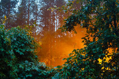 Evening fog  illuminated by a streetlight Royalty Free Stock Images