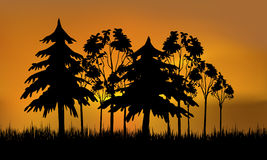 Evening forest. Evening forect over sunset. Vector Stock Photo