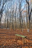 Evening forest bench Stock Photography