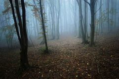 Evening in a forest with fog in autumn Royalty Free Stock Images