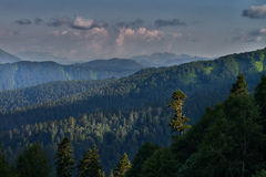 Evening forest landscape Royalty Free Stock Photo
