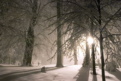 Evening forest snowy landscape Royalty Free Stock Images