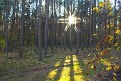 Evening forest Stock Photo