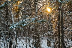 Evening forest. Stock Images