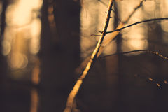 Evening forest Royalty Free Stock Photo