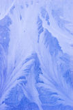 Evening frost pattern. Evening blue frost pattern texture on the glass Royalty Free Stock Photography