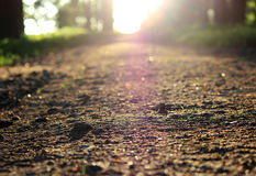Evening Gatchina Park is lit by the summer sun.The path with gravel in the Gatchina Park from a low angle is illuminated Royalty Free Stock Photo