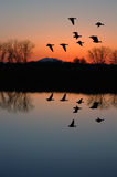 Evening Geese. Reflection of Winter Evening Geese Flying over Wildlife Pond, San Jaoquin Delta, California Flyway Stock Photography