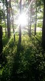 Evening Glory. Another one of Gods beautiful pictures, Shining through the woods Royalty Free Stock Image