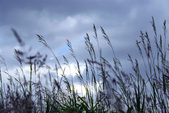 Evening grass Royalty Free Stock Image