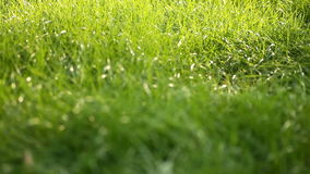 Evening grass with dew in summer park stock video footage