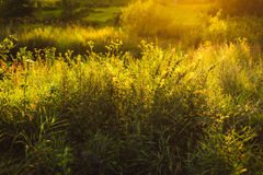 Evening grass. Evening  green grass in sunlight Royalty Free Stock Images