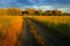 Evening on the gravel road in savannah, Moremi, Okavango delta in Botswana, Afrivca. Sunset in African nature. Golden grass with f. Orest. Beautiful landscape royalty free stock photography