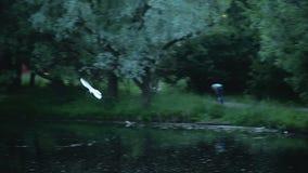 Evening gulls circling stock video footage