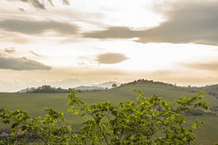 Evening on the hills of Italy Royalty Free Stock Photo