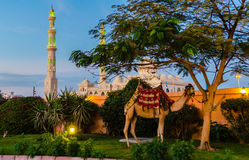 Evening in Hurghada. Egypt. The evening near a mosque in Hurghada. Egypt Stock Photography