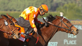 Evening Jewel Wins The Sunshine Millions Distaff Royalty Free Stock Photography