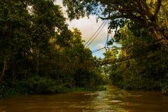 Evening krajobraz lasy i siatka Kinabatangan rzeka, tropikalny las deszczowy Borneo wyspa, Sabah Malezja zdjęcie stock