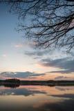 Evening krajobraz nad stawem z few gałąź i drzewami Obrazy Stock