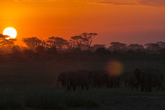 Evening krajobraz z słoniami nightlife obrazy royalty free