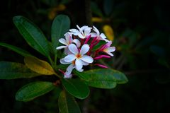 Evening kwiaty Fotografia Royalty Free