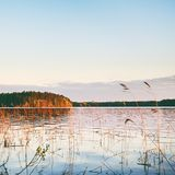 Evening on a Lake Royalty Free Stock Photography