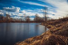 Evening on the lake with reeds Royalty Free Stock Photos