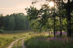 Evening landscape. Evening calm year landscape. Russian wood Stock Image