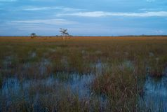 Evening Landscape of the Everglades stock photos
