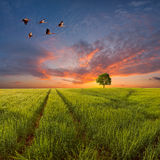Evening landscape with a green field Royalty Free Stock Photography