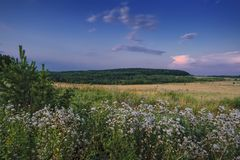 Evening landscape meadow against the backdrop of the forest at sunset royalty free stock photography