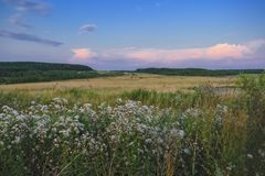 Evening landscape meadow against the backdrop of the forest at sunset stock images
