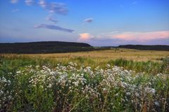 Evening landscape meadow against the backdrop of the forest at sunset stock photo