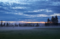 Evening landscape with pine trees and fog Stock Photography