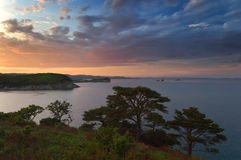 Evening landscape with pine trees on the seashore. Royalty Free Stock Images