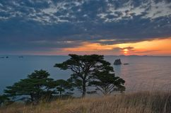 Evening landscape with pine trees on the seashore. royalty free stock photo