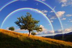 Rainbow over tree Stock Photos