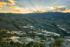 Evening landscape in the rice terraces Stock Images