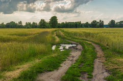 Evening landscape with road between wheat fields Stock Photos