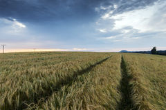 Evening landscape in summer Royalty Free Stock Image