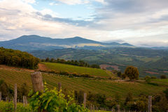 Evening landscape with vineyards Royalty Free Stock Images