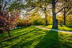 Evening light on colorful trees in Druid Hill Park, Baltimore, M Stock Images