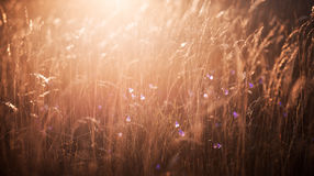 Evening light falling on the grass. And flowers bells Stock Photo