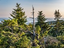 View of Spruce Forest and Frenchman Bay from Summit of Cadillac Mountain. Evening light falls on the spruce and fir forest atop Cadillac Mountain in Acadia Royalty Free Stock Image