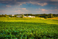Evening light on farm fields in Howard County, Maryland. Royalty Free Stock Image